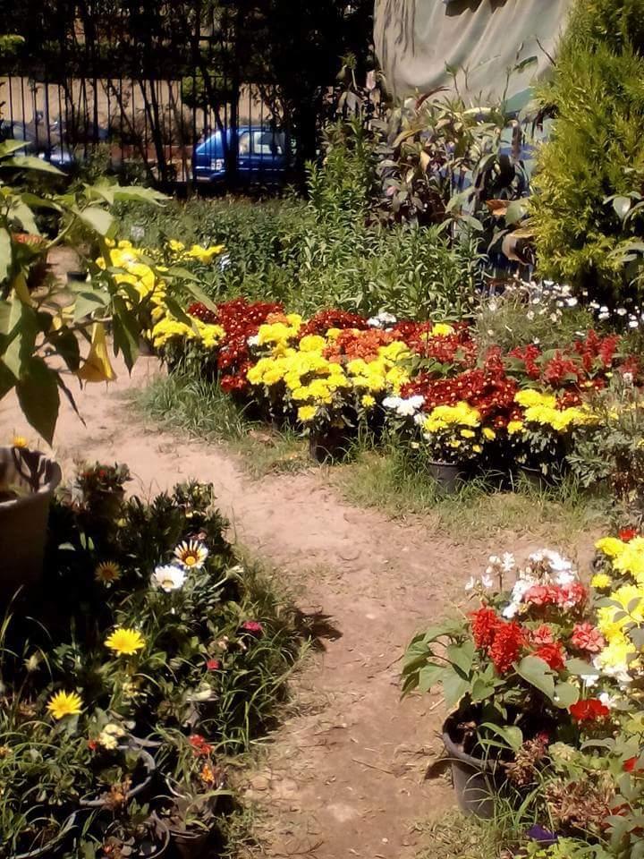 الزهور 13