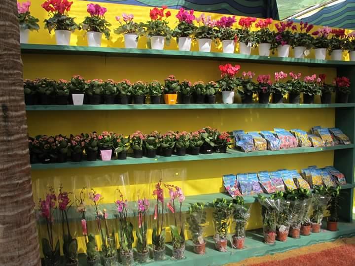 الزهور 11