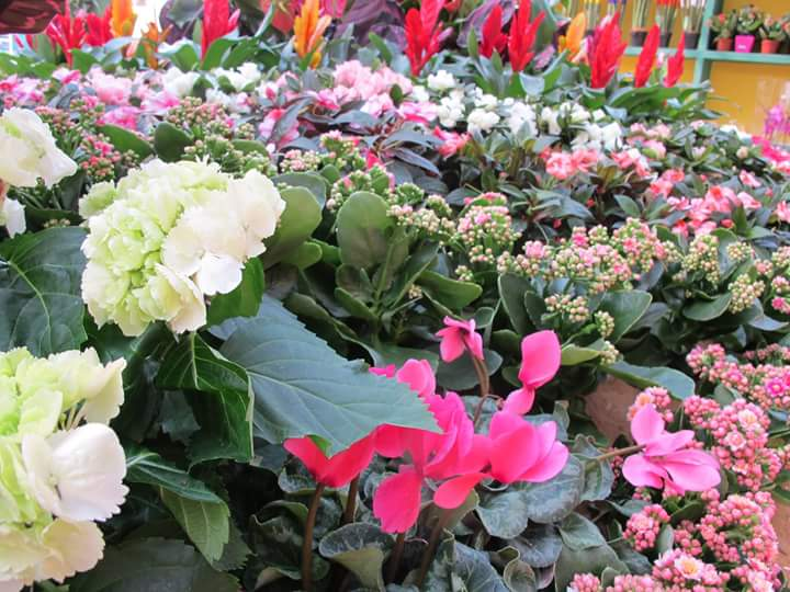 الزهور 5