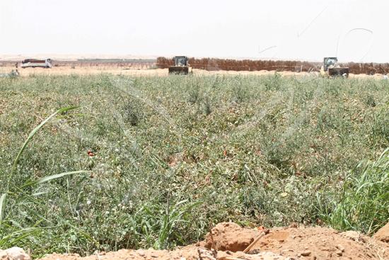 حملة إزالة التعديات على الأراضى بالجيزة (12)