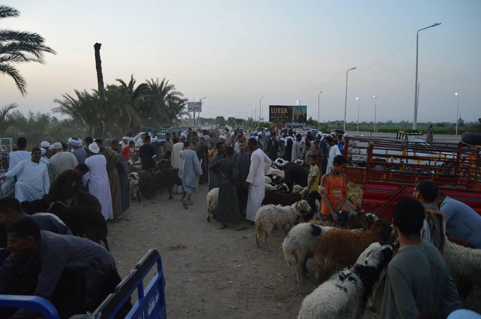 الأهالي يتوافدون علي سوق المواشي قبل ليلة العيد (1)
