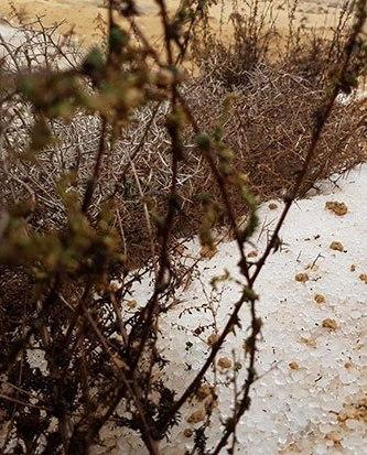 95756-برد-وثلوج-(2)