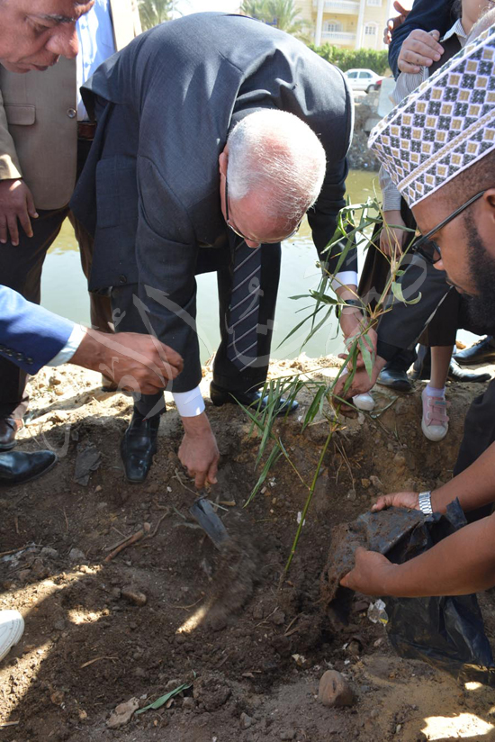 مشروع زراعة أشجار البامبو بجسور المصارف (2)