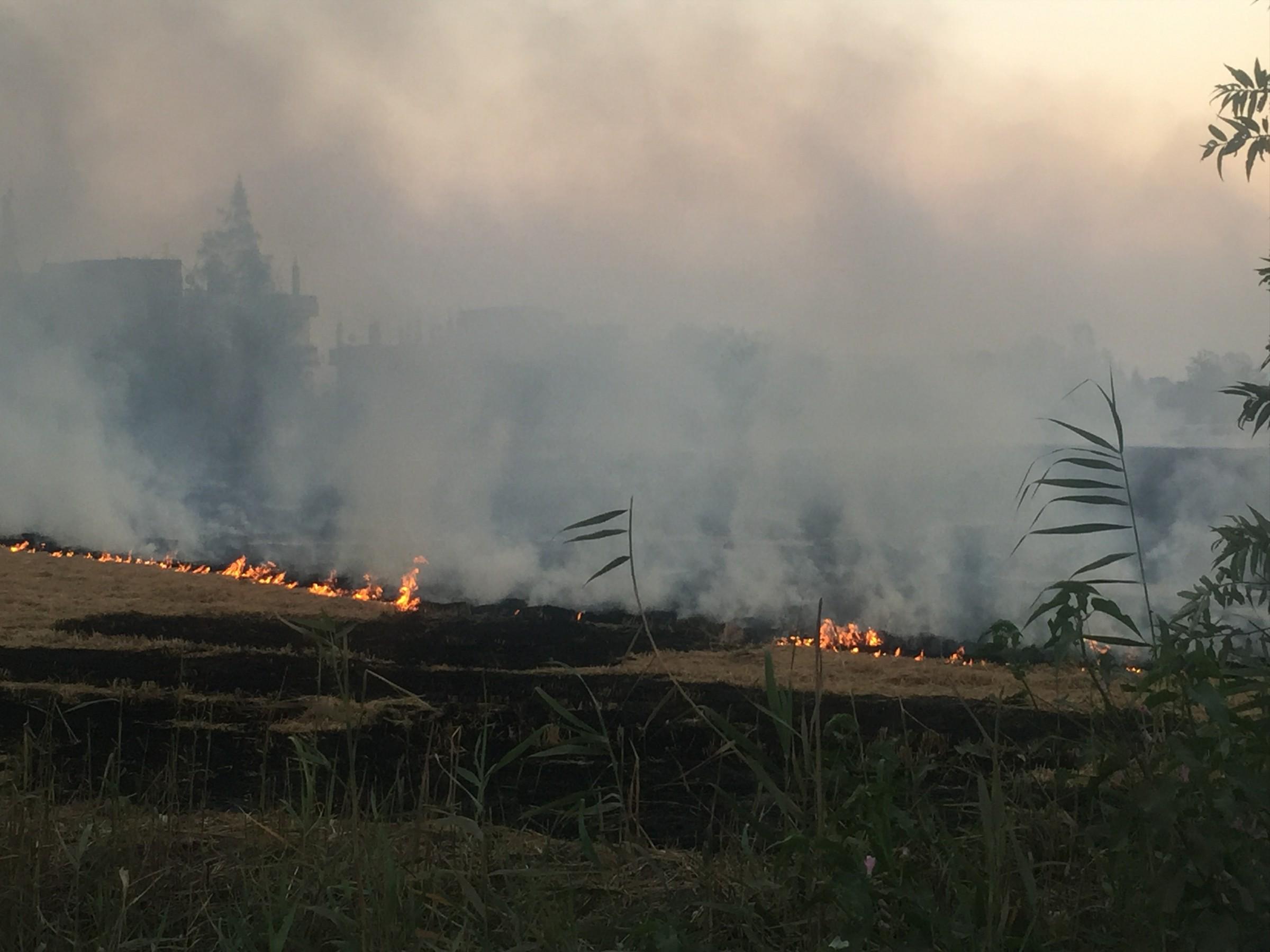حريق قش الأرز