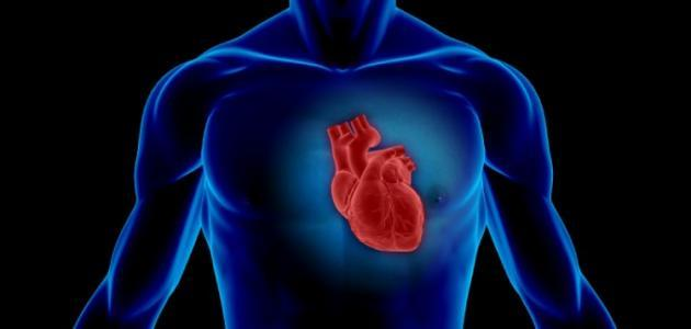 قلب الإنسان
