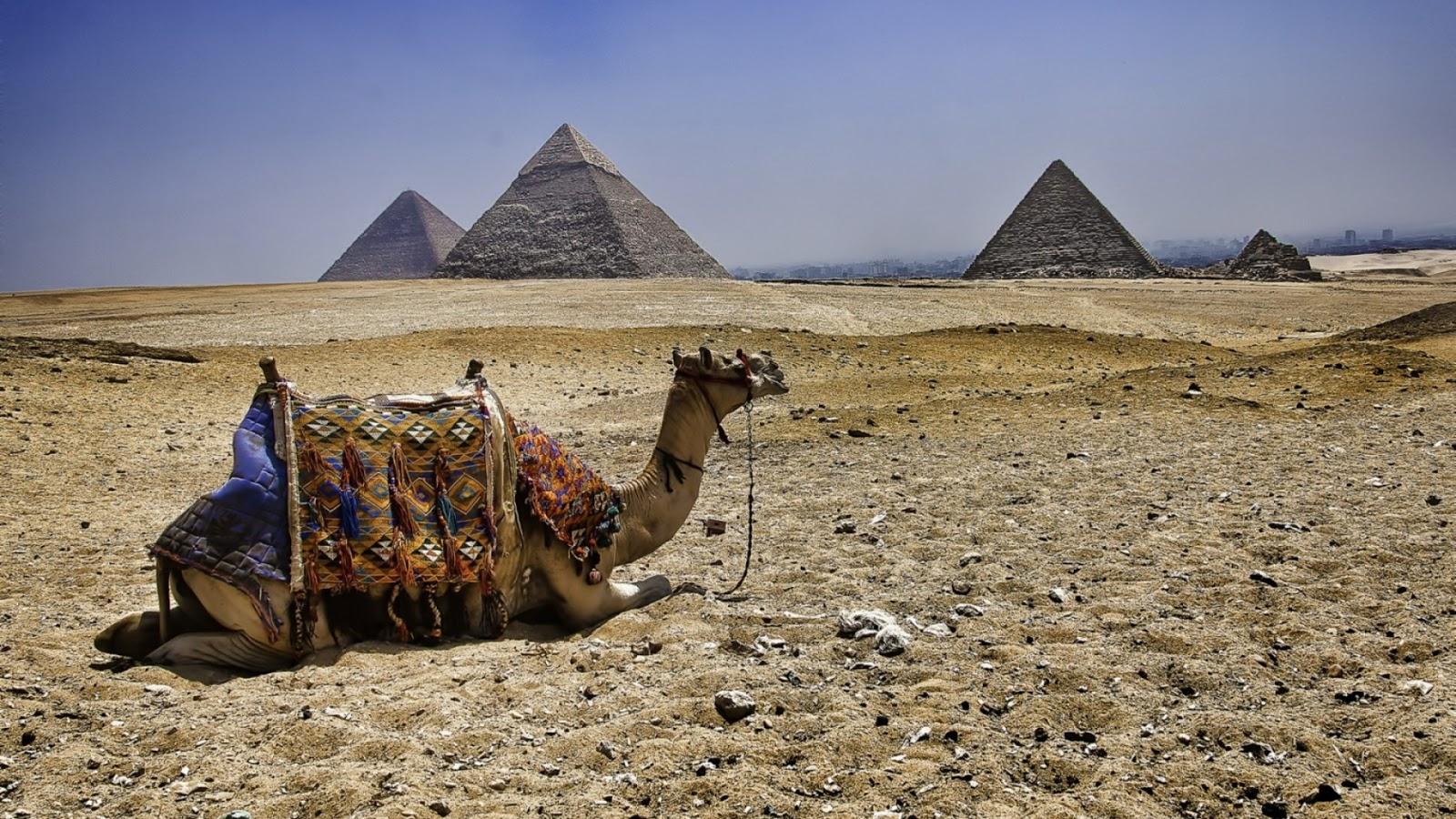 camel_pyramids_egypt_77063_1920x1080