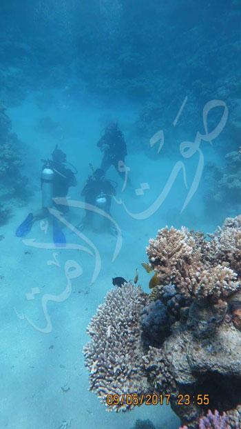 عروس البحر .. قصة أول فتاة مصرية قائد غواصات بالشرق الأوسط (16)