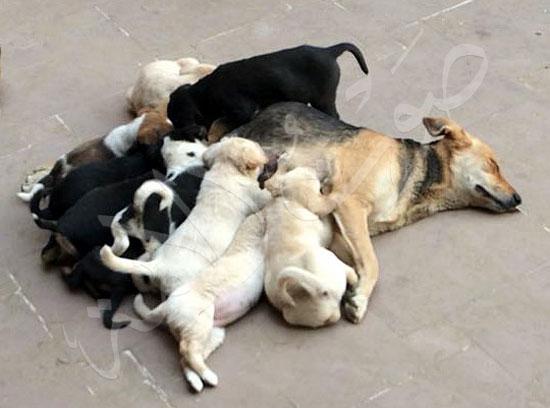 كلبة (2)