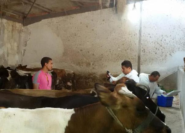 حملات تحصين الحمى القلاعية ببورسعيد (3)