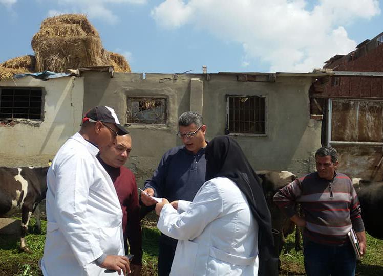 حملات تحصين الحمى القلاعية ببورسعيد (6) (1)