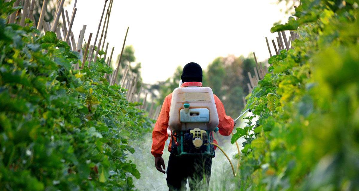 رش المبيدات (2)