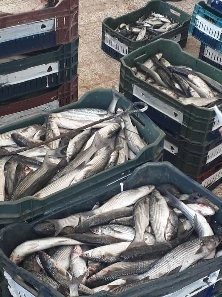صيادين شمال سيناء (3)