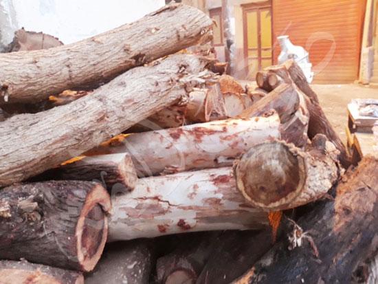 3-أخشاب-الكافور-والمانجو