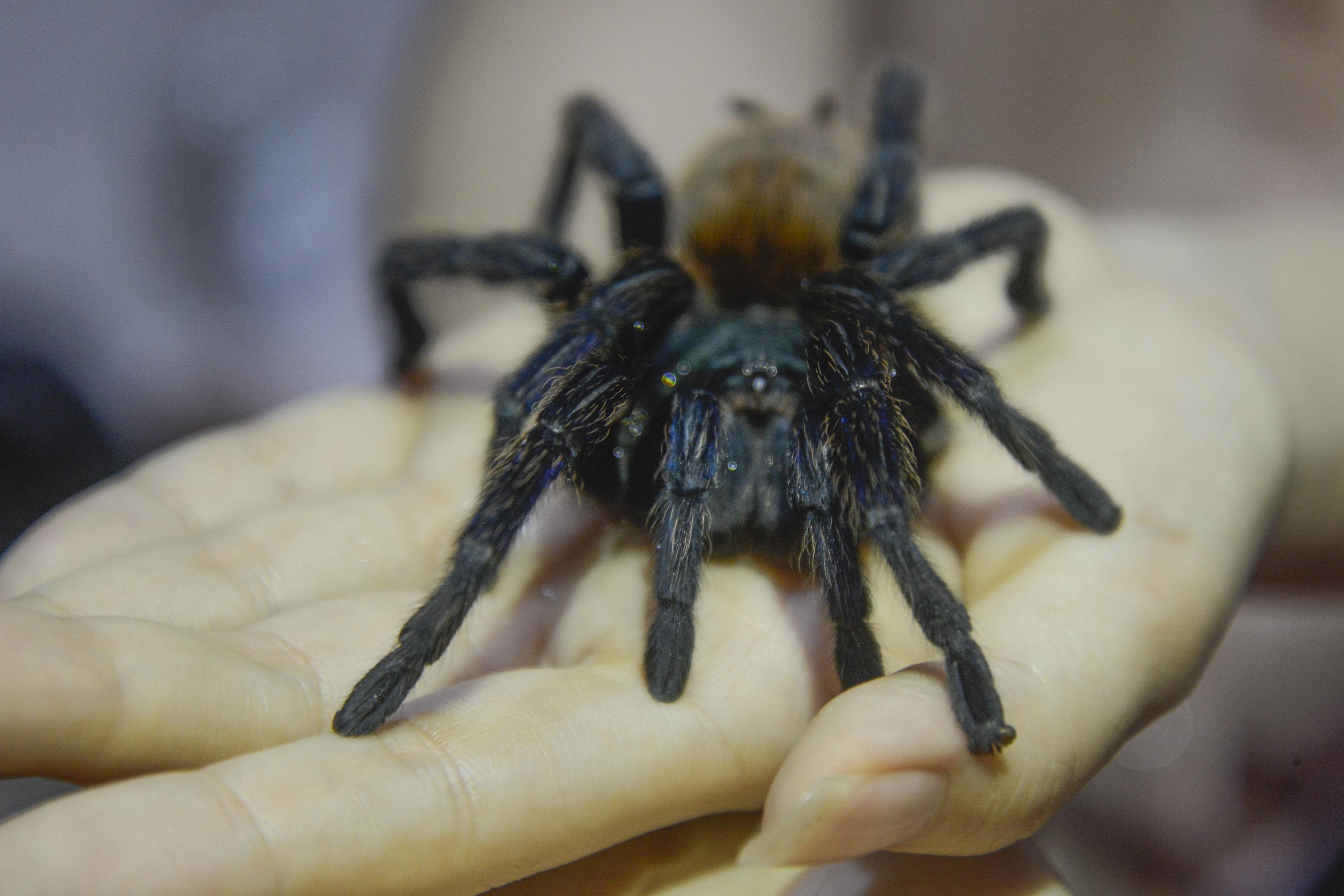 1678625-زوج-يشترى-عنكبوت-من-أجل-تخويف-حماته