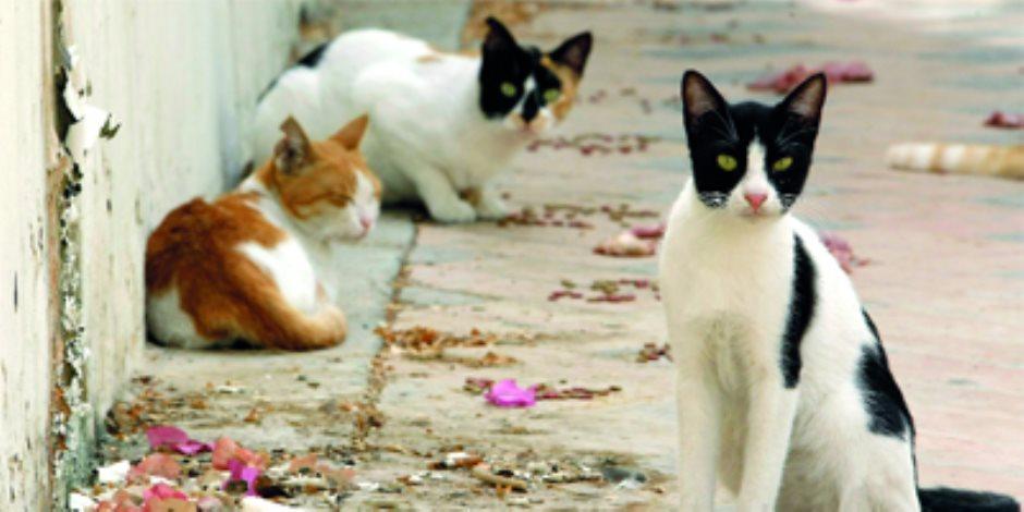 قطط وكلاب الأقصر فى نعيم.. شقيقتان بريطانيتان انتشلاتهم من مستنقع الشوارع