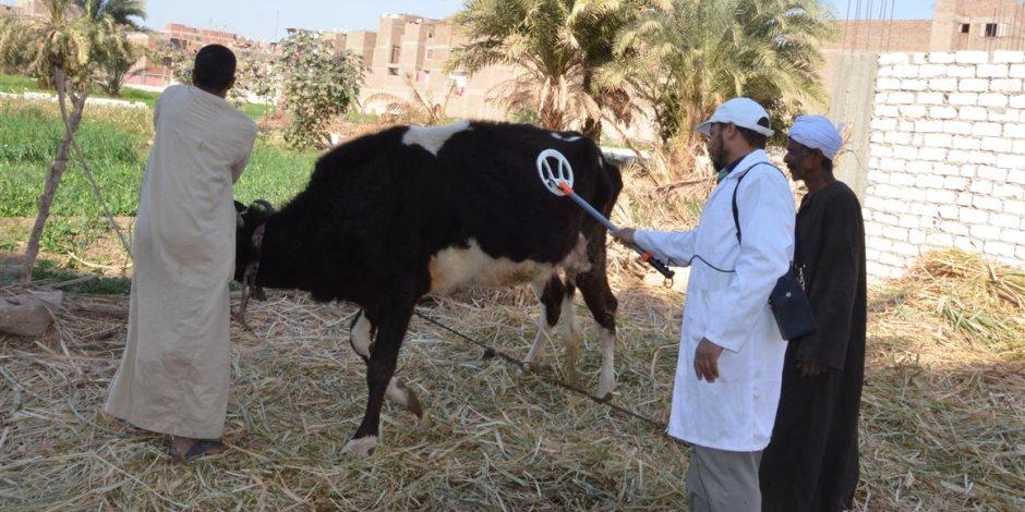 أشمون الأولى على المحافظة فى حملة التطعيم ضد الحمى القلاعية