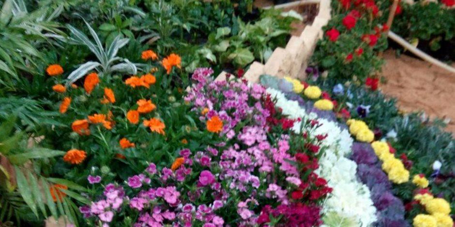 تحضيرات وتجهيزات حديقة الأورمان لاستقبال معرض زهور الربيع (صور)