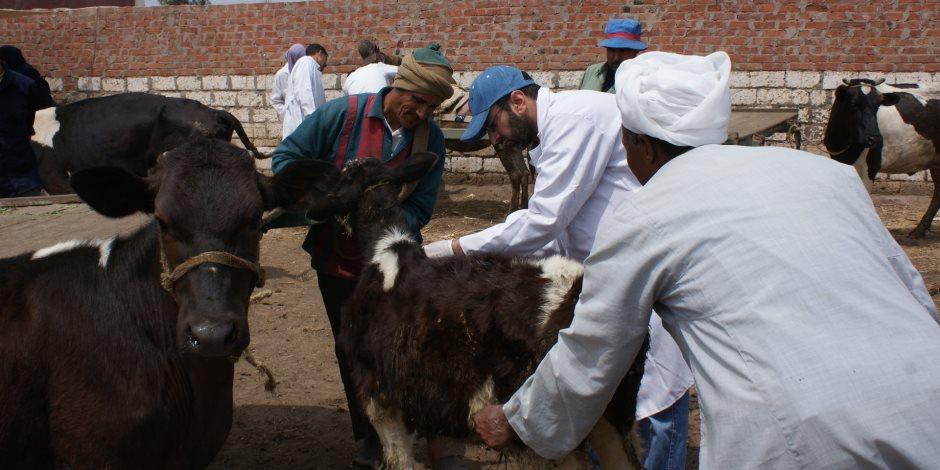 تحصين أكثر من 6 آلاف رأس ماشية ضد الحمى القلاعية بدمياط