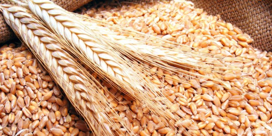القطاع الخاص يعبئ صوامع مصر.. تعرف على حجم واردات القمح الضخمة في آخر 7 شهور
