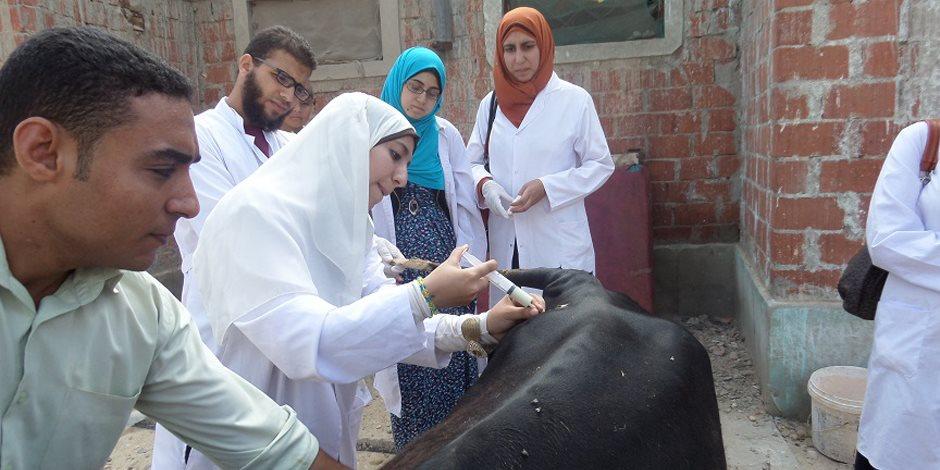 تحصين 42 ألف رأس ماشية وترقيم 13 ألف آخرين بكفر الشيخ