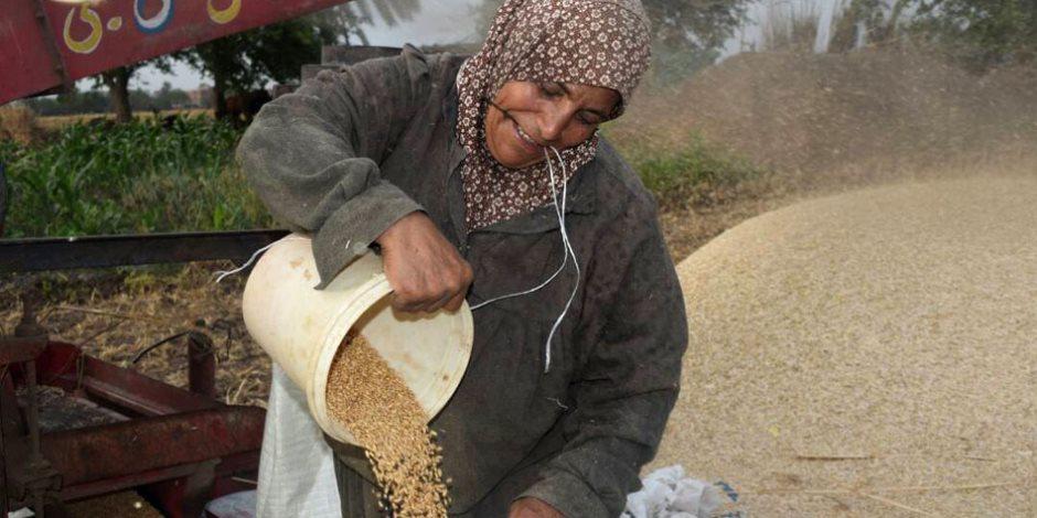 بعد اتهام النواب بأنه غير دستوري ..هل ينتصر البرلمان للفلاحين ويعدل أسعار توريد القمح؟