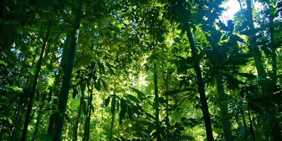 علماء يدعون إلى زراعة مزيد من الأشجار لمكافحة التغير المناخي