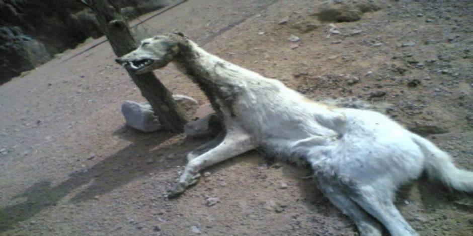 من السلعوة للذئاب.. حيوان مجهول يعقر 7 أطفال بأسوان