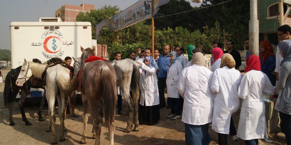 بيطرى شمال سيناء: تحصين 13 ألف رأس ماشية ضد الحمى القلاعية