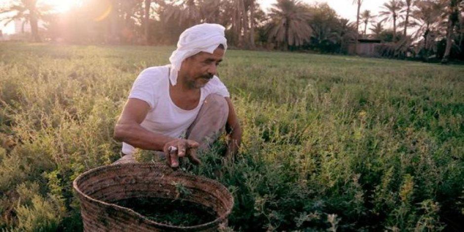 هل تنجح الحكومة فى تنفيذ خطة الـ217 مليار جنيه لإنقاذ الزراعة المصرية؟