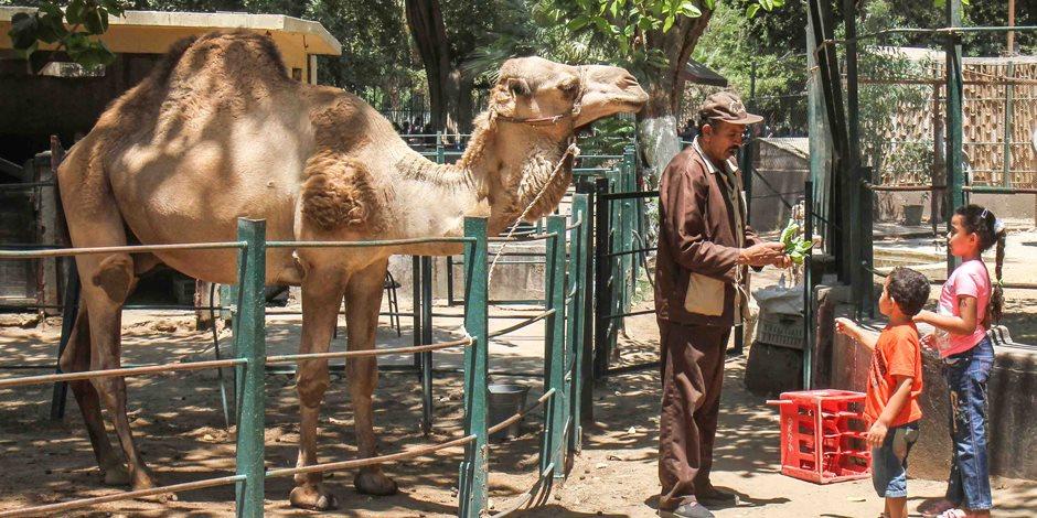 حديقة «حيوان الجيزة» تنهي استعداداتها لاستقبال العيد: «القطر» في انتظارك