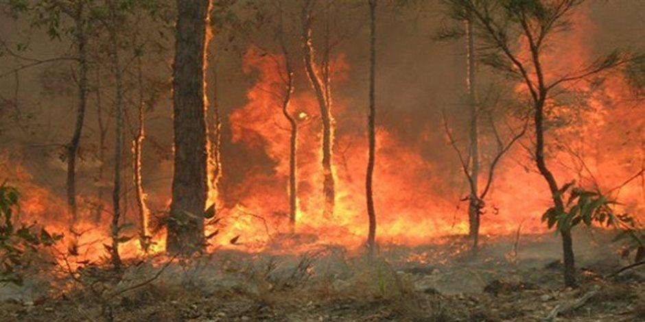 السيطرة على حريق محدود في أشجار نخيل شمالي الأقصر