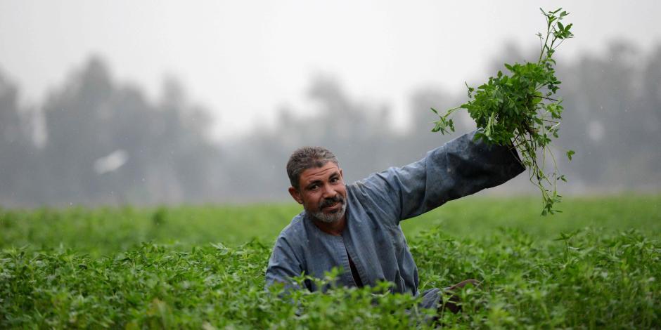 «مركز تايه يا ولاد الحلال».. «البحوث الزراعية» يبحث عن تمويل أبحاثه ودراساته