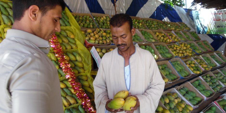 تجار المانجو بالإسماعيلية: الإقبال ضعيف هذا العام (فيديو وصور)