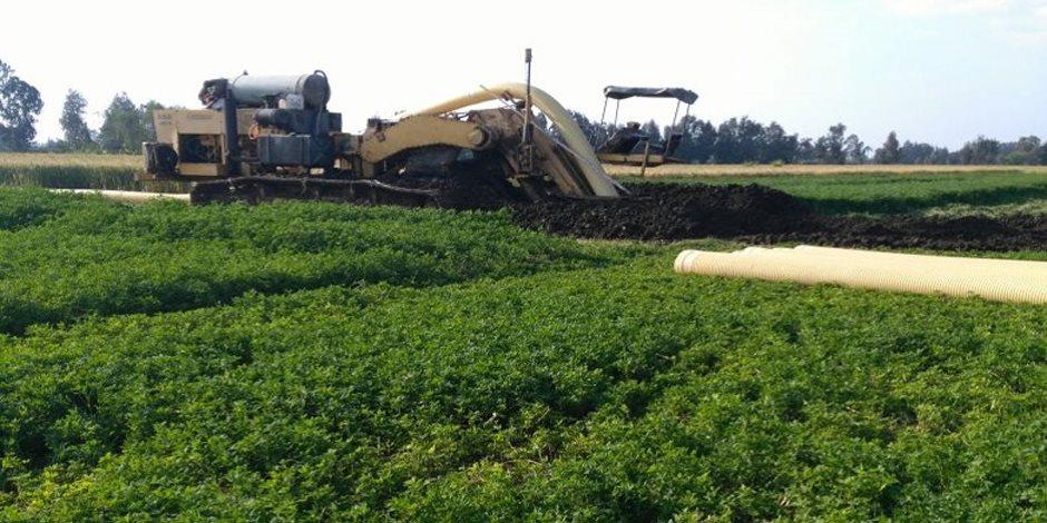 تحذيرات من تقليل مساحات زراعة الأرز بمصر.. خبير محاصيل: سنتحول إلى مستوردين لأردأ الأنواع