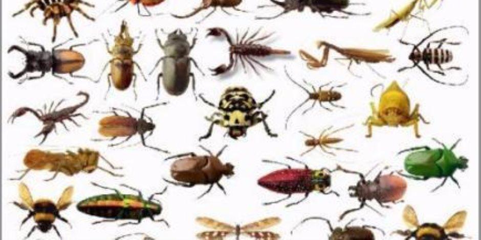 10 نصائح لتجنب ظهور الحشرات في المنزل .. حبات من الفلفل ومسحوق القهوة