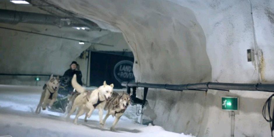 سباق طريف بين لاند روفر وكلاب على الجليد (فيديو)