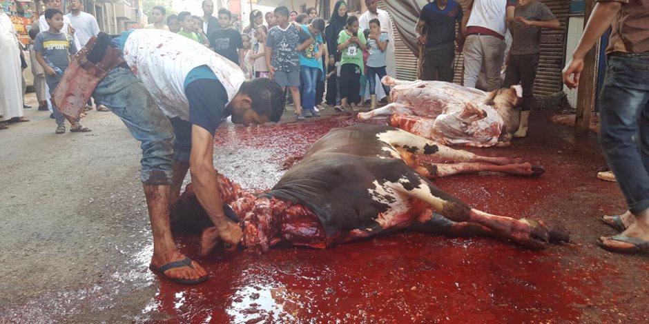 الختم الأحمر أساسي بعد السلخ.. ضبط 3 أشخاص يذبحون الماشية المريضة بالبحيرة