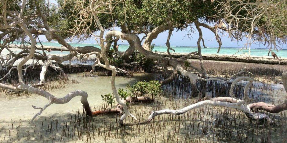 بحيرة «النيزك».. لؤلؤة ربانية بمرسى علم (إنفوجراف)