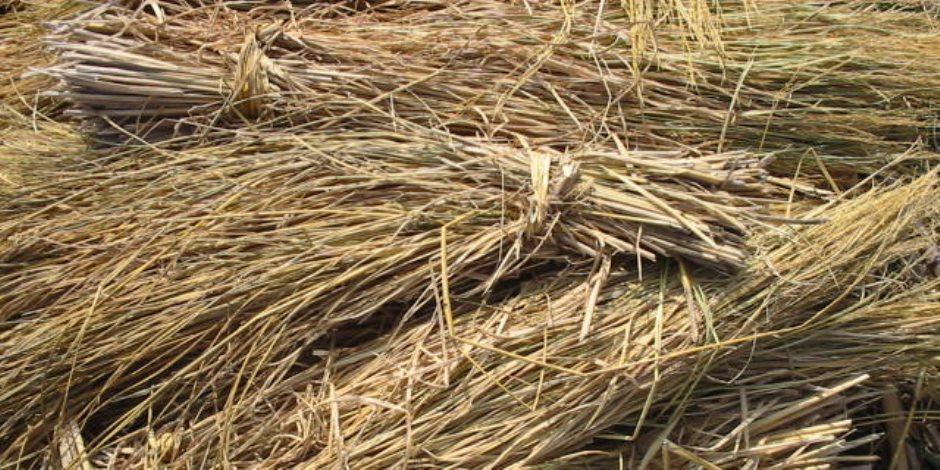البيئة: تجميع 3810 طن قش أرز وتحرير 7 محاضر لمكامير فحم مخالفة في الشرقية