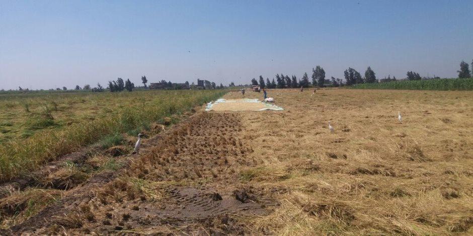"""إجراءات جديدة لـ"""" الزراعة """" لمنع زراعة أصناف الأرز عالية الإستهلاك للمياه .. تعرف عليها"""