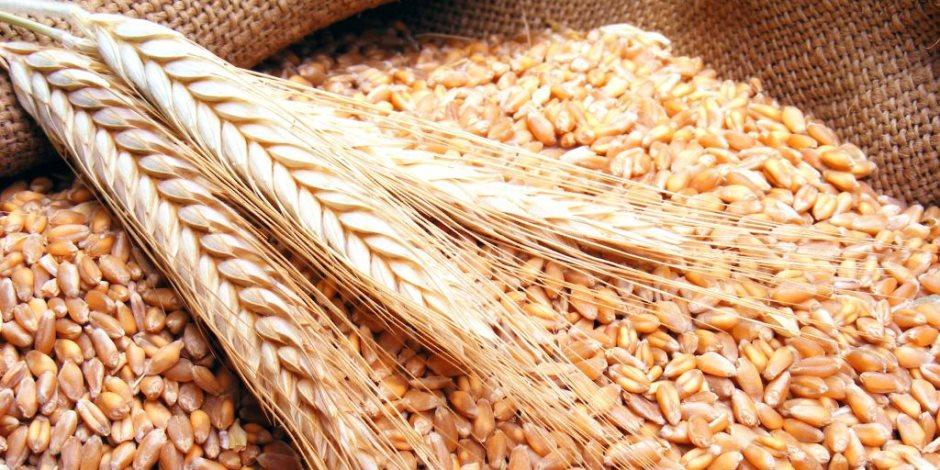 وكيل وزارة الزراعة بجنوب سيناء: تم حصاد 130 فدان قمح بمدينة رأس سدر