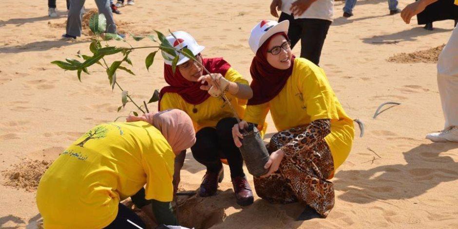 """""""ازرع شجرة لبكرة"""".. مبادرة لغرس 80 ألف شتلة مانجو بالإسماعيلية"""