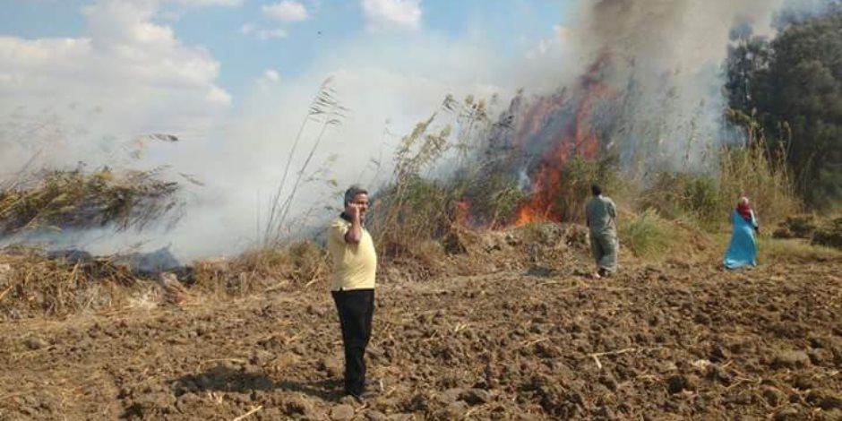 البيئة: نساعد المزارعين على التخلص من قش الأرز حتى لا يمثل عبئا
