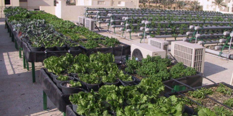 التدريب على التقنيات الحديثة لزراعة الأسطح بنادي الزراعيين