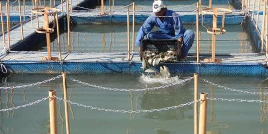 أهم 6 نقاط على مائدة المشروعات القومية للاستزراع السمكي