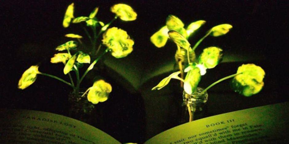 س & ج كل ما تريد معرفته عن أهمية النباتات والصناعات التي تدخل فيها