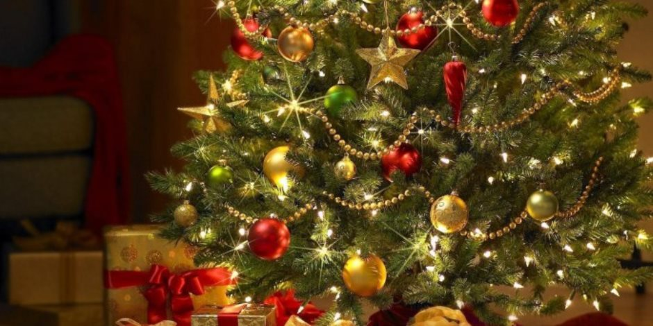 شجرة الكريسماس أصلها مصري.. عالم مصريات يفجر مفاجأة