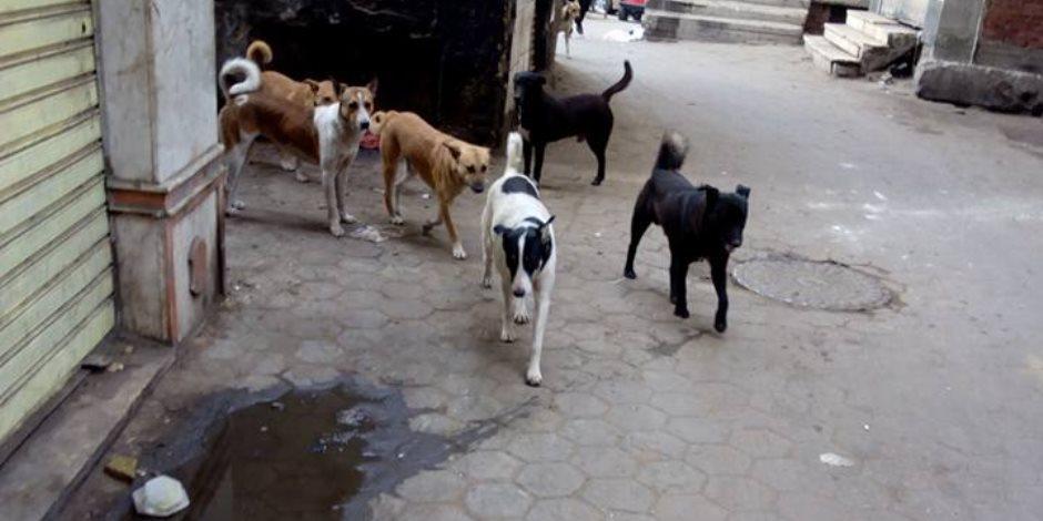 بعد 68 سنة من محاولات قتلها.. مصر تلجأ إلى تصدير الكلاب الضالة لإطعام كوريا الجنوبية