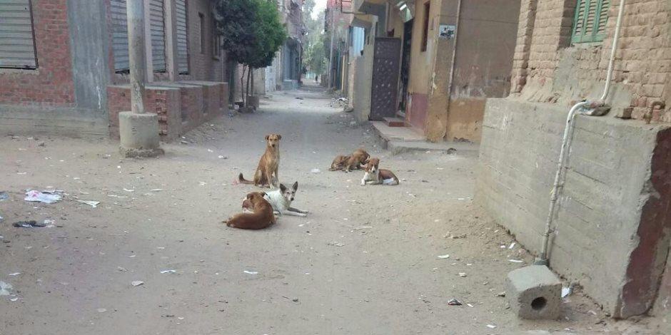«عضة كلب».. «الخدمات البيطرية» للبرلمان: نطالب بزيادة الاعتمادات المالية لمواجهة الكلاب الشرسة