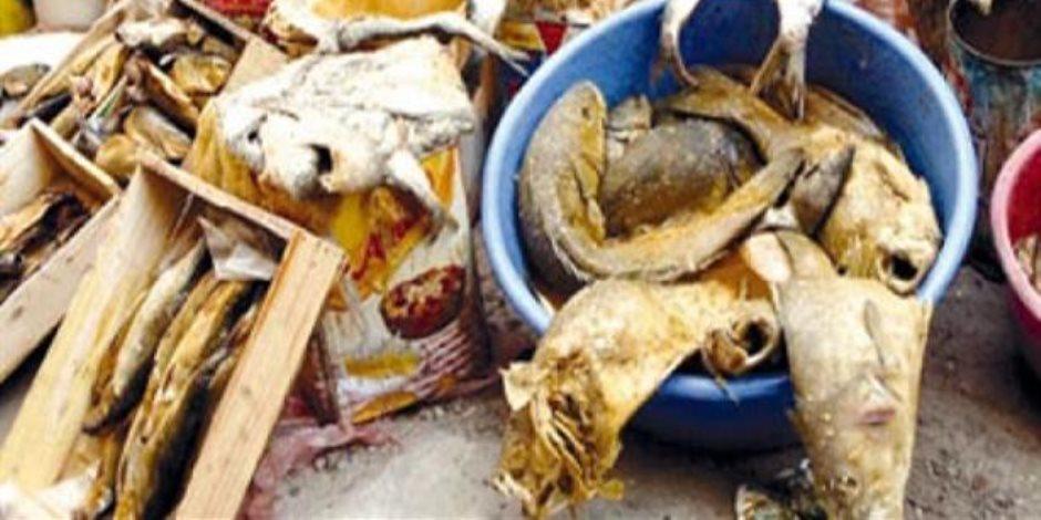 قبل شم النسيم.. ضبط 12 طن رنجة وأسماك مجمدة منتهية الصلاحية في الدقهلية